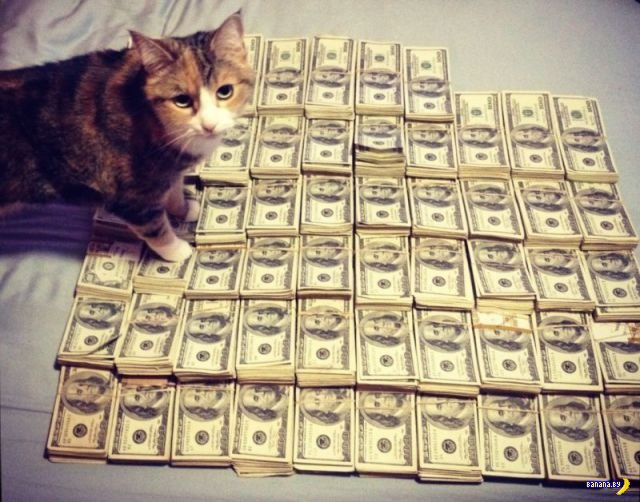 Самые богатые коты Интернета
