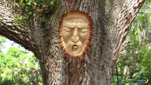 Резьба по живым деревьям