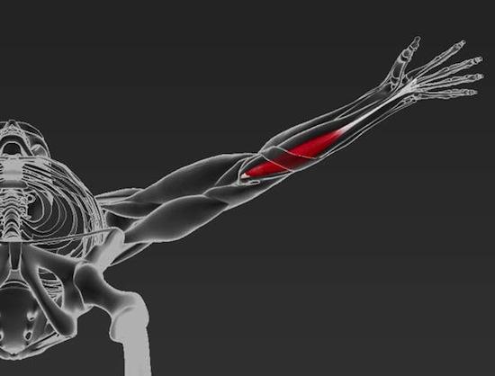 У 14% людей нет одного из сухожилий