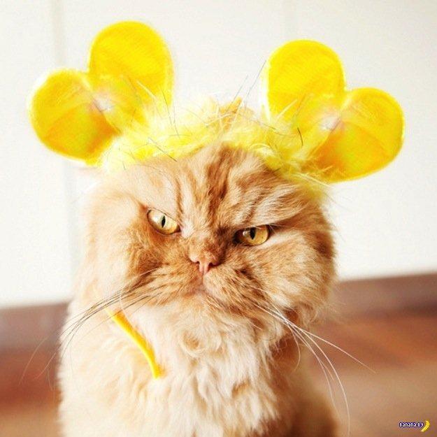 Коты, которые не любят позировать