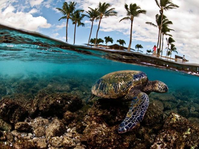 Шедевры подводной фотографии