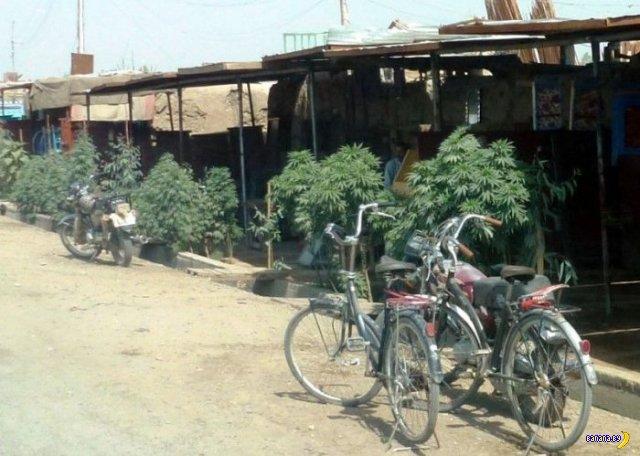 Озеленение улиц в Афганистане