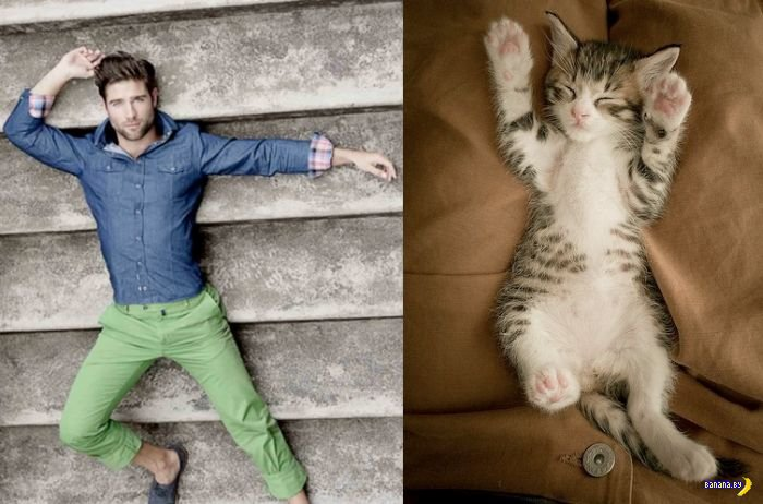Девушкам - коты и красивые мужчины