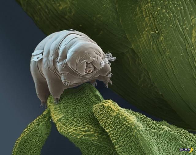 Ужасы под микроскопом
