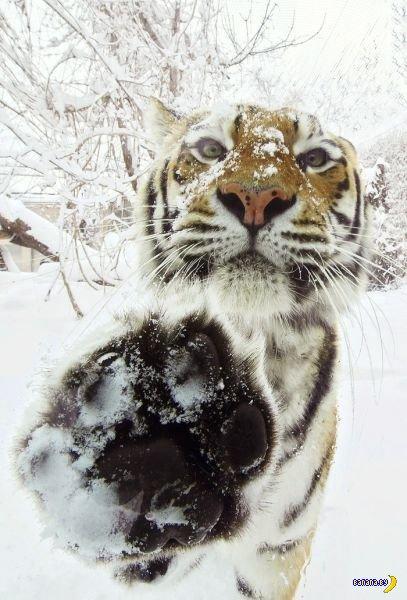 Животный мир - 34