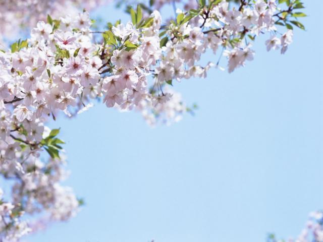 Весна придет в Беларусь уже на этой неделе