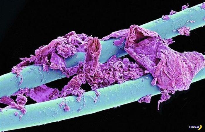 Всякая всячина под микроскопом