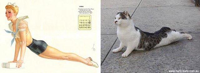 Pin-up коты