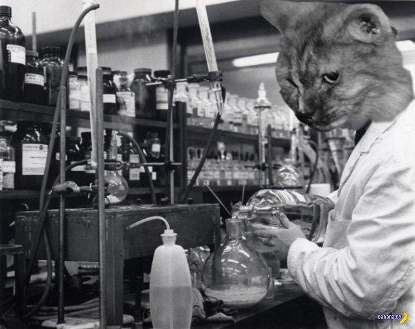 Коты-ученые из 1960-х