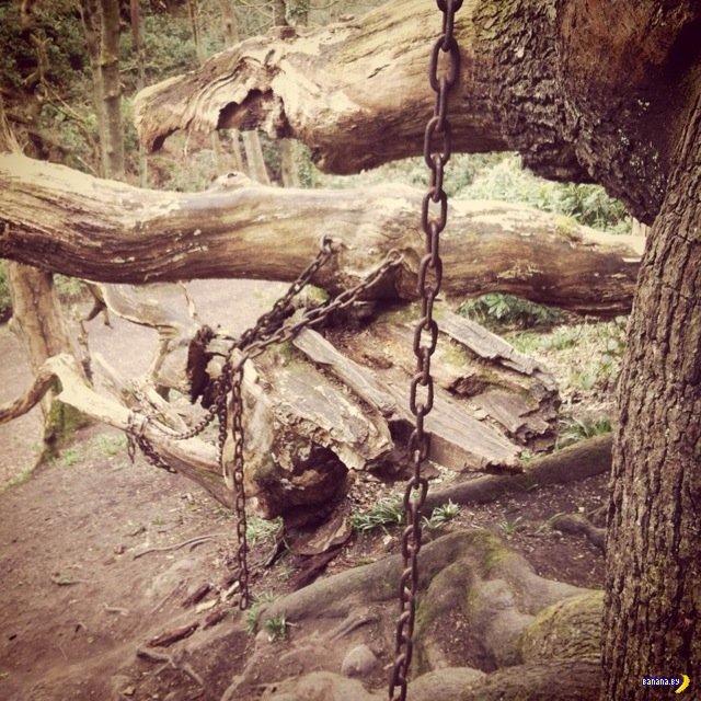 Старая легенда о дубе в цепях