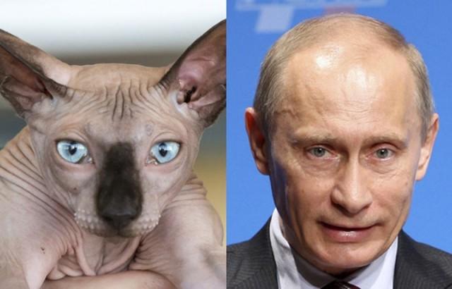 Коты и Путин