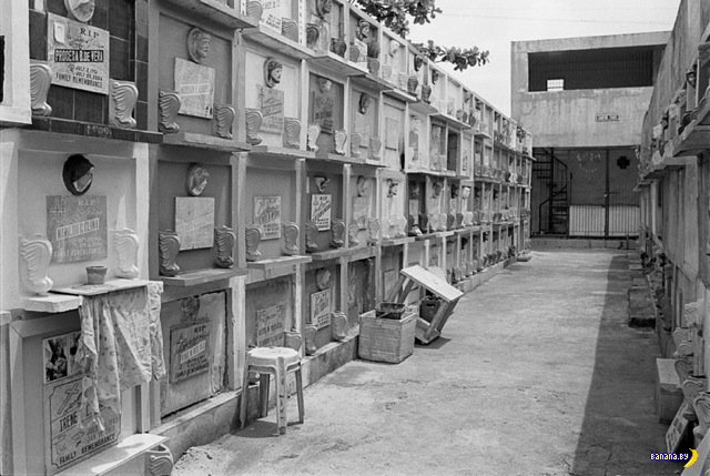 Обитатели кладбища в Маниле