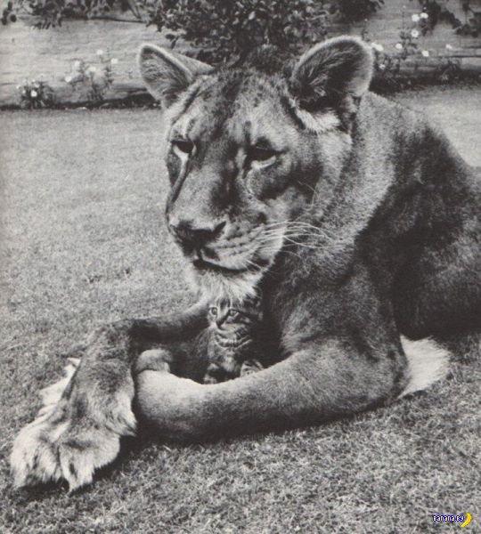 Животный мир - 54
