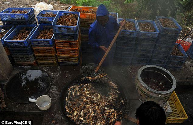Китайское блюдо из сваренных заживо цыплят