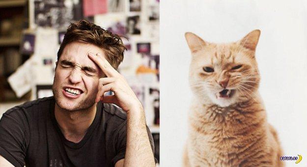 Коты и модели