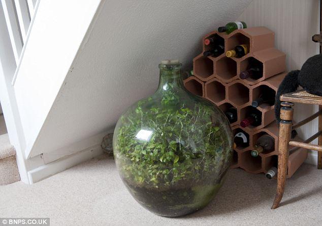 Замкнутая экосистема в бутылке