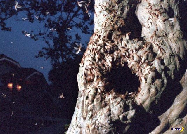 Как выглядит нашествие термитов
