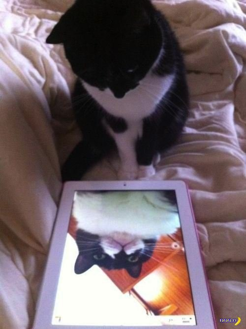 Автопортреты котов