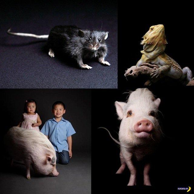 Портреты котиков и собакенов