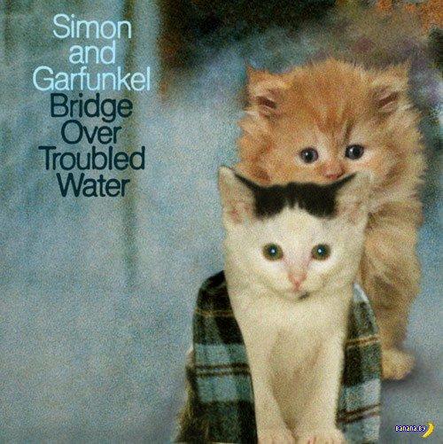 Коты на обложках известных альбомов