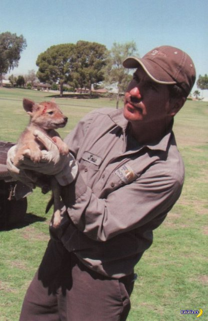 Спасение койота