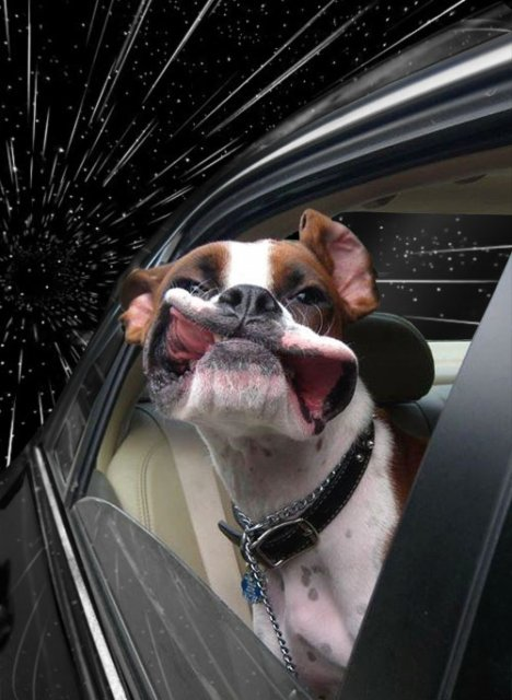 Сверхсветовые собаки