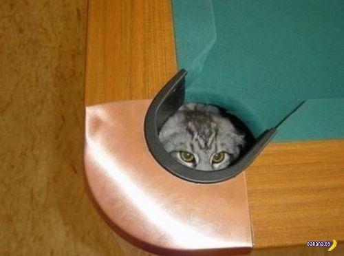 Животный мир - 63 - Найди кота!