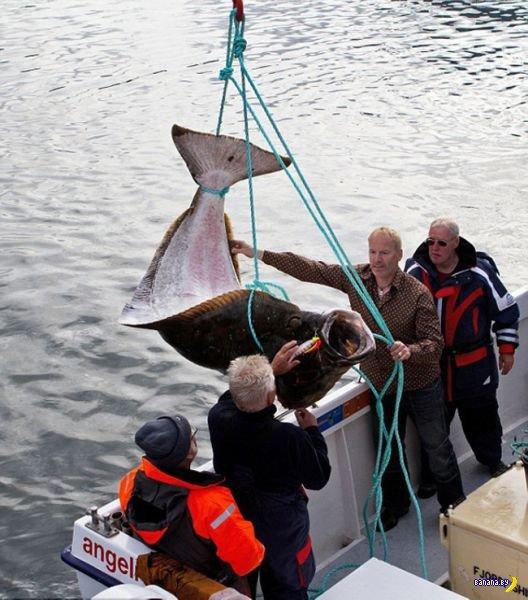 Рыбаки хвалятся уловом