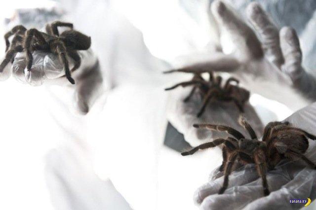Бизнес на пауках