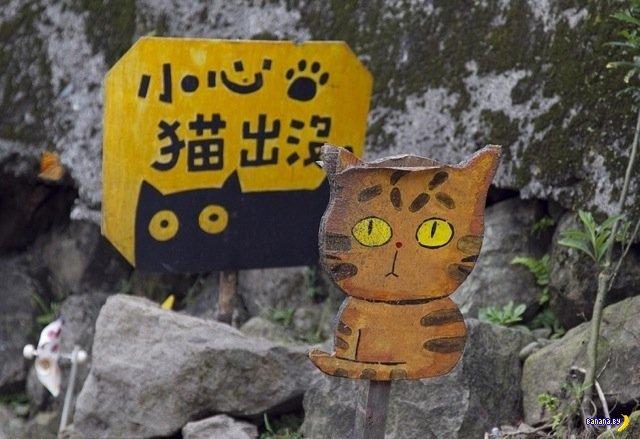 Кошачья деревня на Тайване