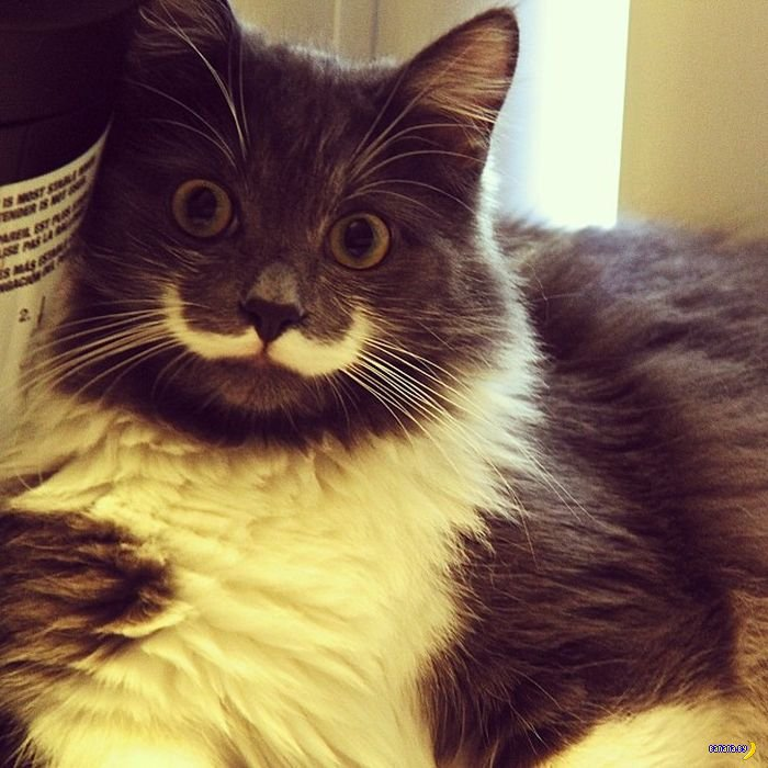 Усатый кот