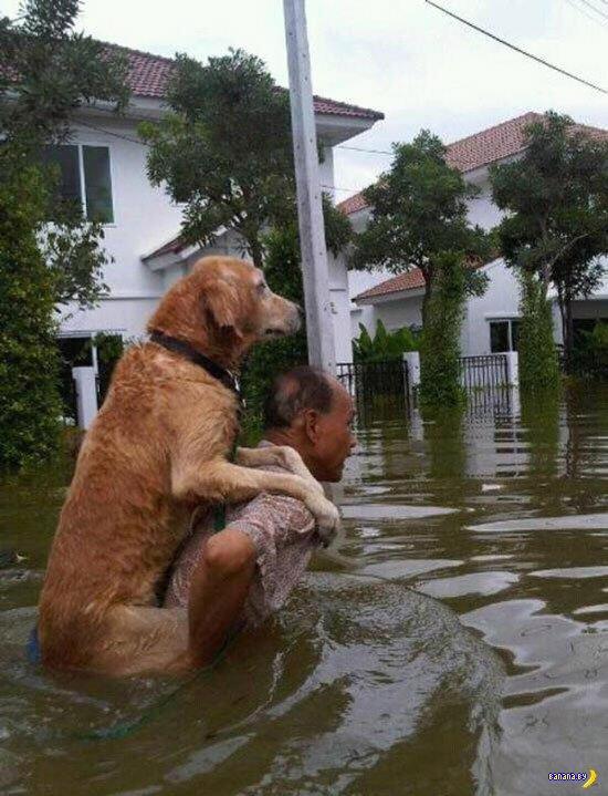 Собаки - классные!