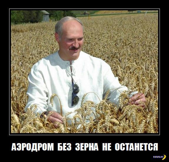Зерно и ёлки