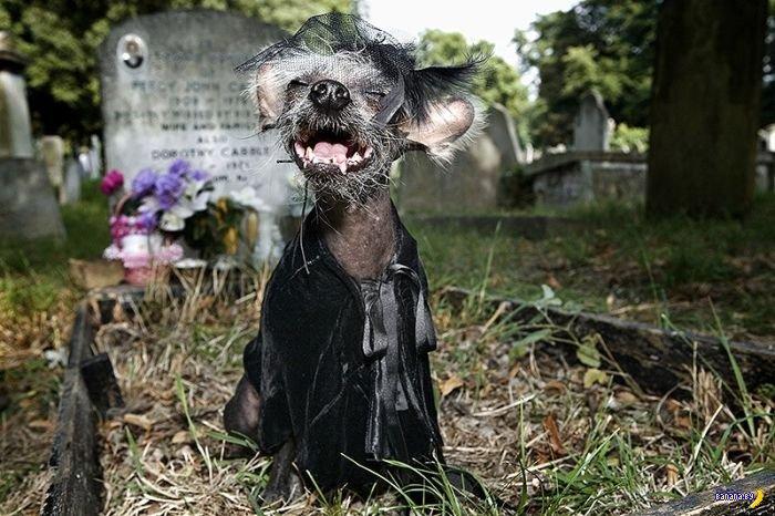 Так это же Чини, знаменитый пес-уродец!