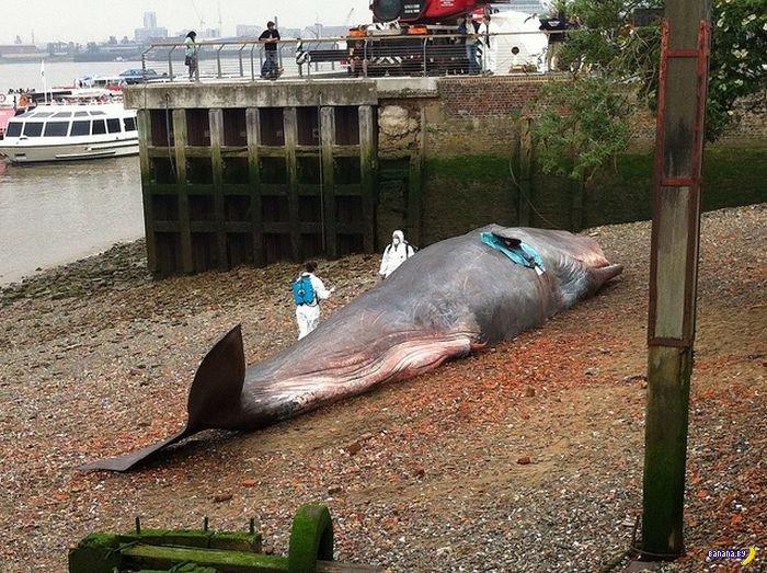 Туша кита в качестве прикола