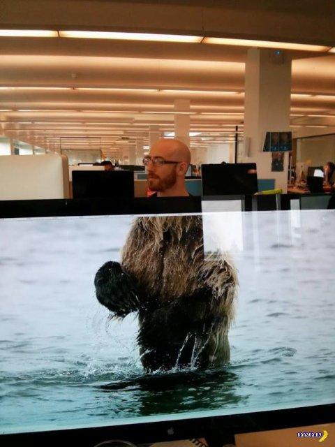 Как развлечь себя в офисе?
