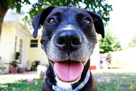 Собаки-улыбаки
