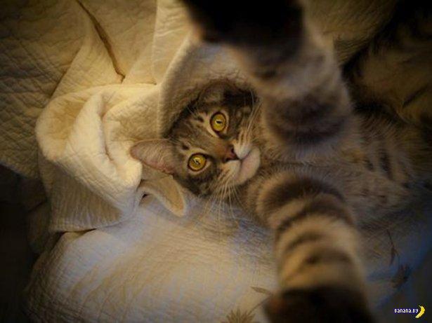 Автопортреты котов - 2