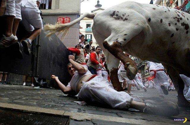 Люди получили от быков в Памплоне