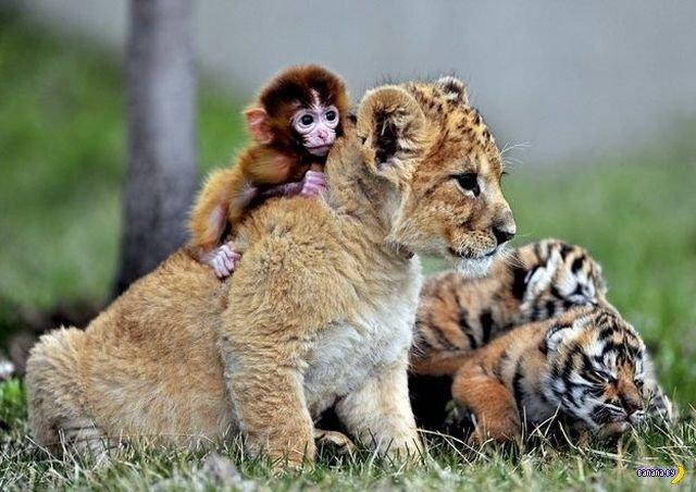 Животный мир - 87