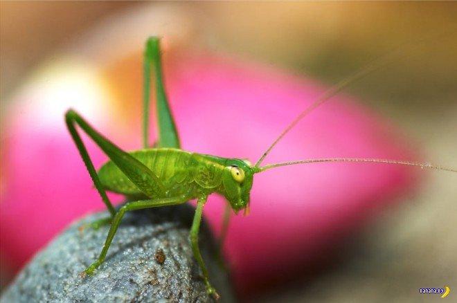 Макрофото насекомых