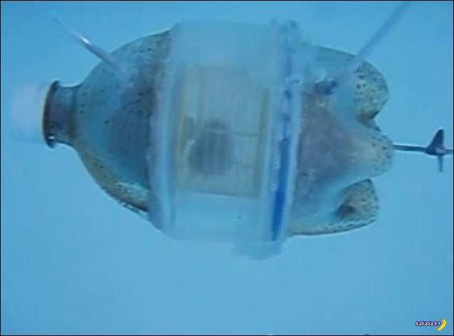 Подводная лодка для хомяка