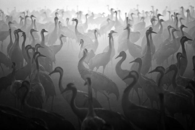 Роскошные черно-белые фотографии