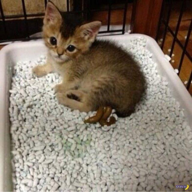 Трогательная история котенка по имени Васаби-чан