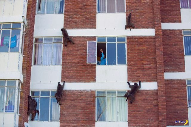Банды вандалов и воров атакуют ЮАР
