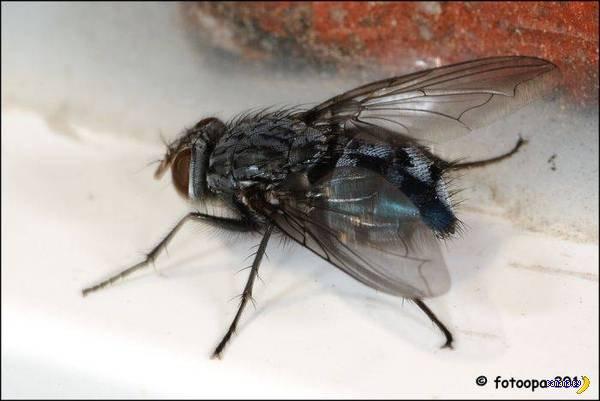 Снять муху, например