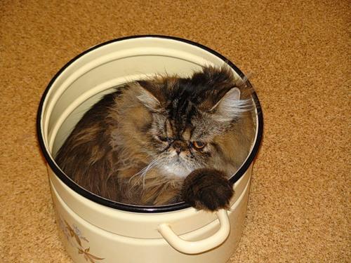 Вы любите кошек? Вы просто не умеете их готовить!