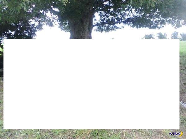 Холм, дерево, молния