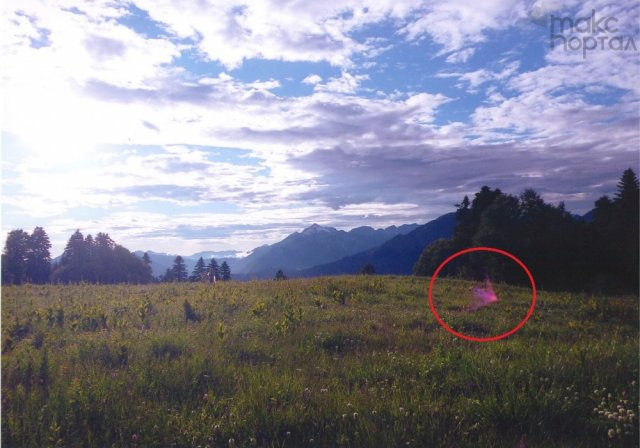 В Сочи сфотографировали НЛО, похожий на птицу