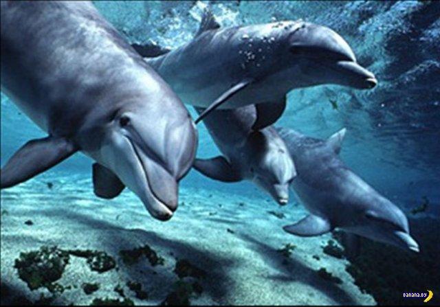 Индийское правительство признало дельфинов личностями